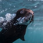 Seal pup animal Ocean Steve Benjamin