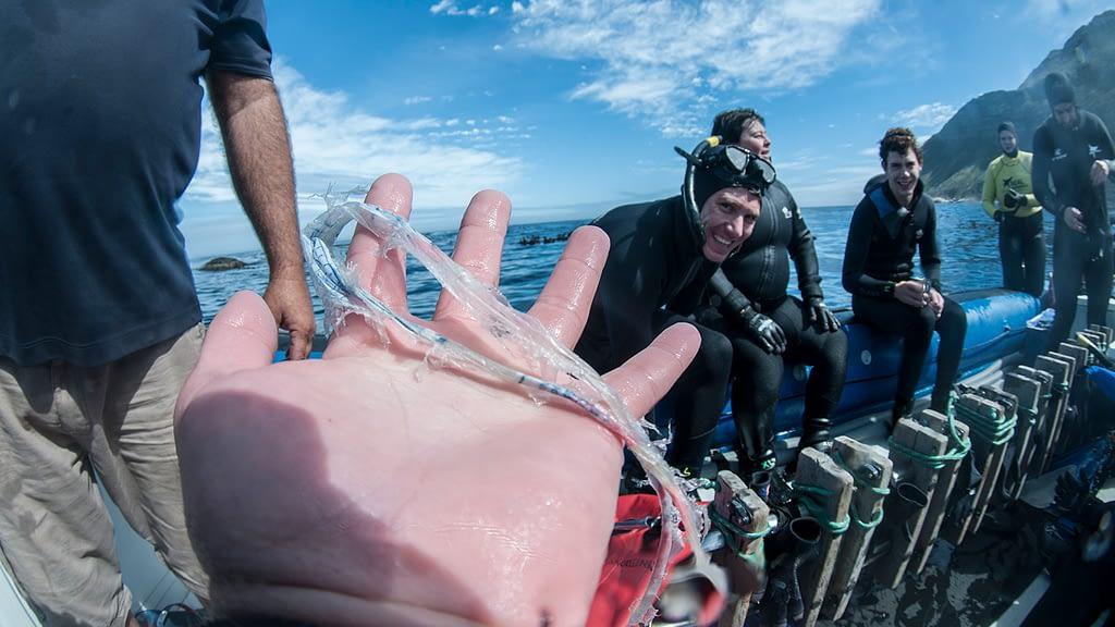 Seal pup animal Ocean Steve Benjamin